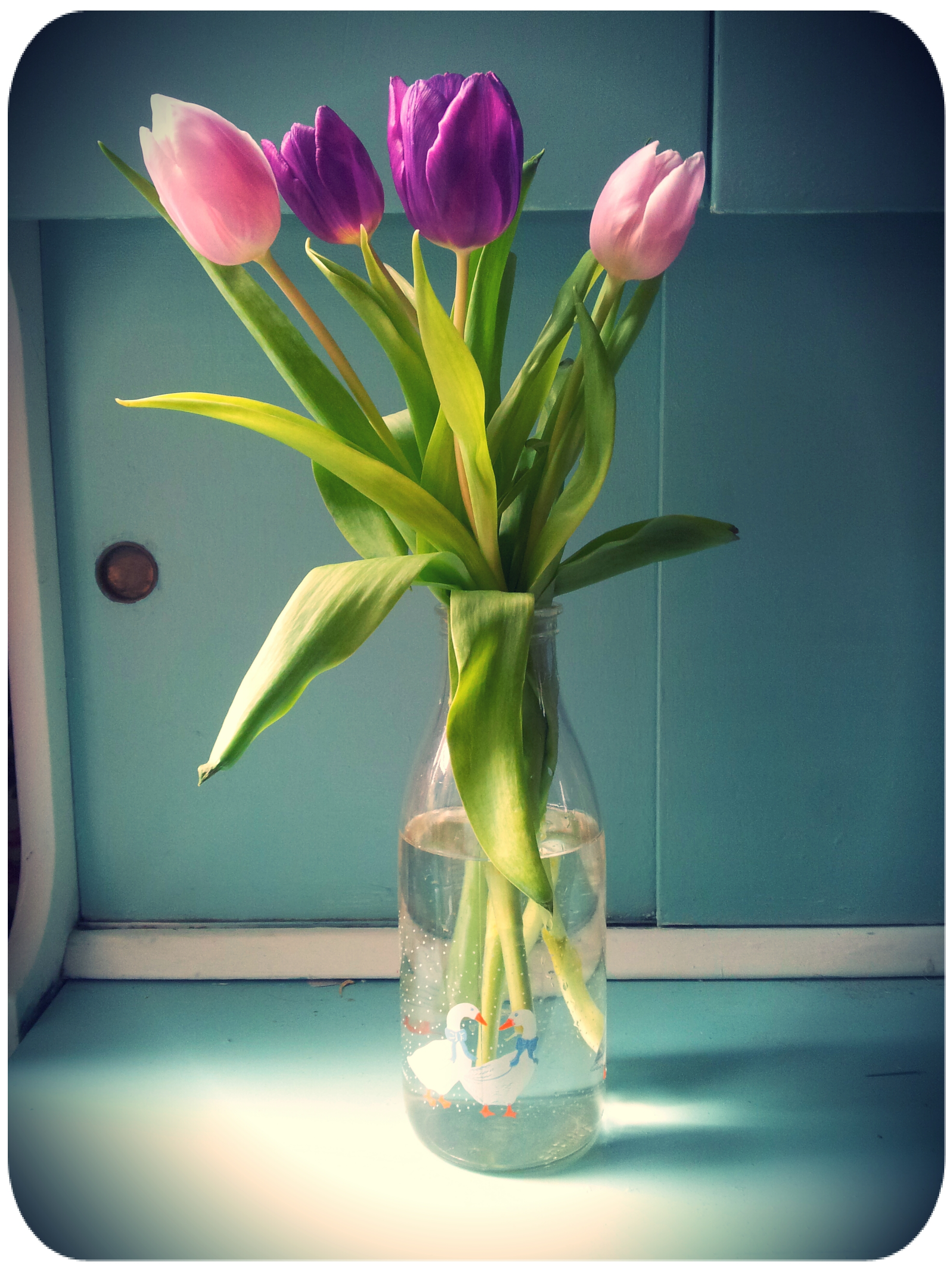 Some of the beautiful tulips giving to me by my colleagues in my new bottle