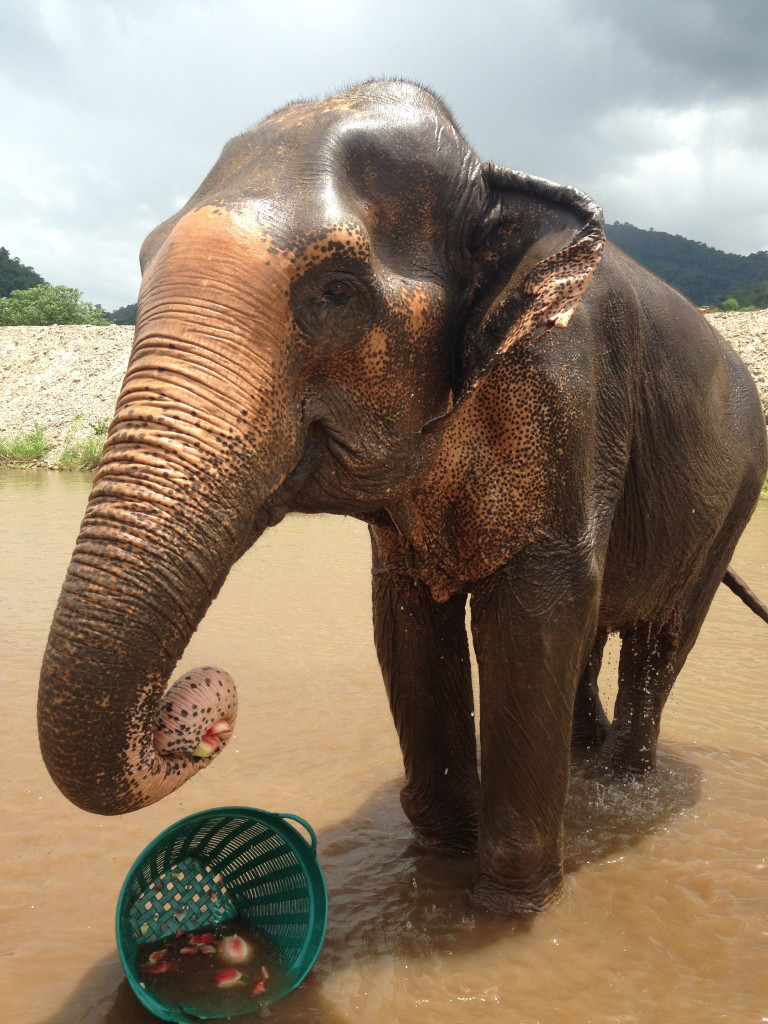 family travel thailand - elephant sanctuaries in Chiang Mai